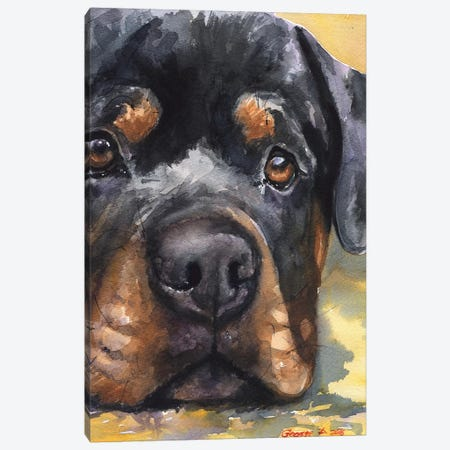 Rottweiler Canvas Print #GDY128} by George Dyachenko Canvas Print