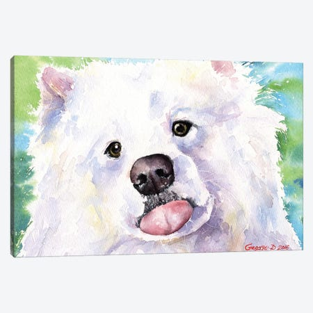 Samoyed Canvas Print #GDY129} by George Dyachenko Art Print