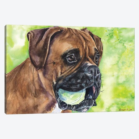 Boxer And Ball Canvas Print #GDY152} by George Dyachenko Canvas Artwork