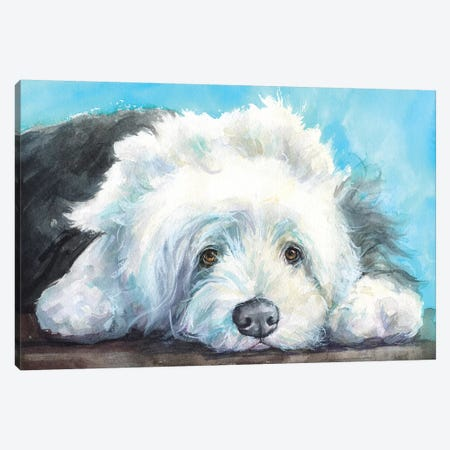 English Shepherd Old Dog Canvas Print #GDY159} by George Dyachenko Canvas Artwork