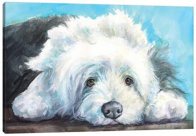 English Shepherd Old Dog Canvas Art Print