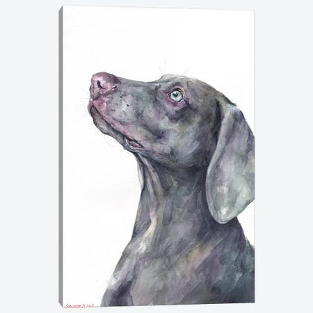 Weimaraner Canvas Print #GDY176} by George Dyachenko Art Print