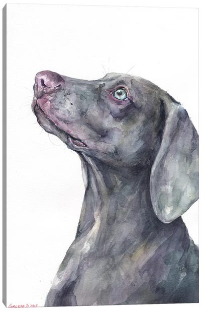 Weimaraner Canvas Art Print