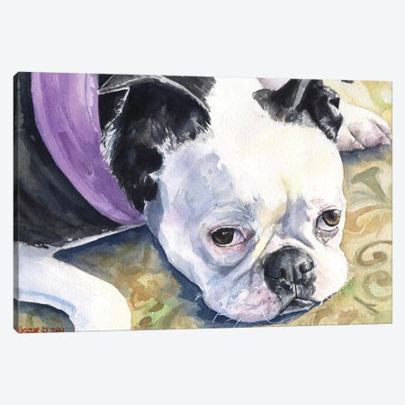 Boston Terrier Canvas Print #GDY17} by George Dyachenko Canvas Art Print