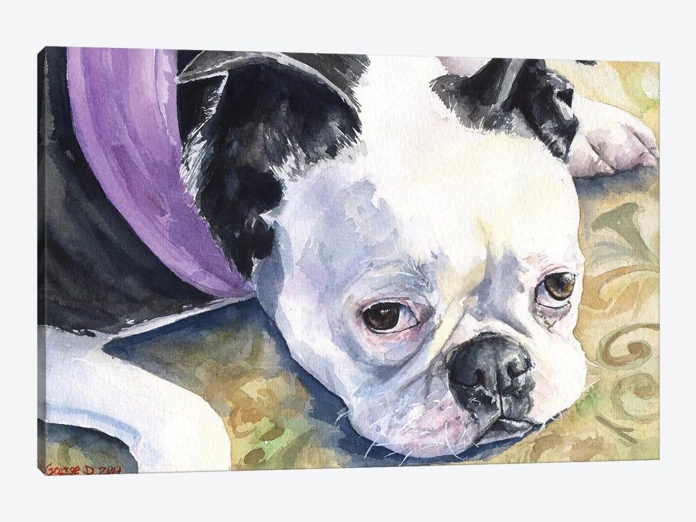 Boston Terrier by George Dyachenko 1-piece Canvas Artwork