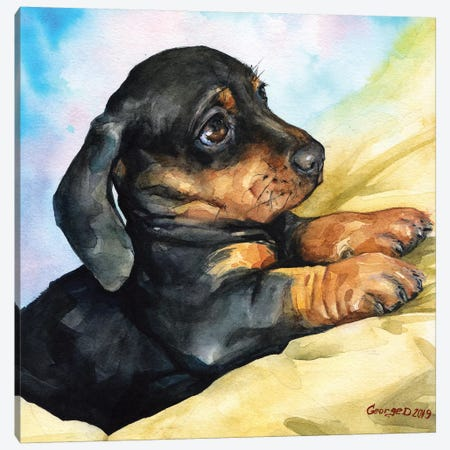 Dachshund Puppy Canvas Print #GDY188} by George Dyachenko Art Print
