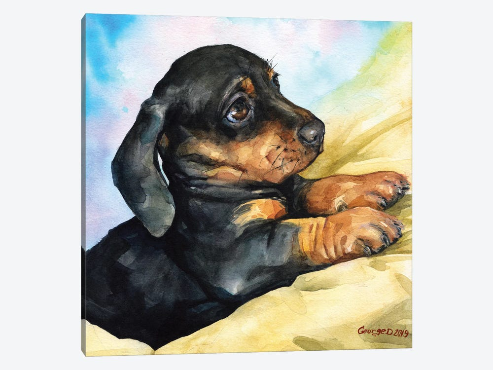 Dachshund Puppy by George Dyachenko 1-piece Canvas Art Print