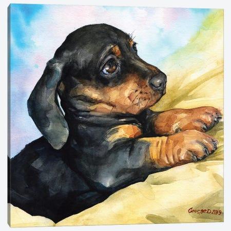 Dachshund Puppy Canvas Print #GDY188} by George Dyachenko Art Print