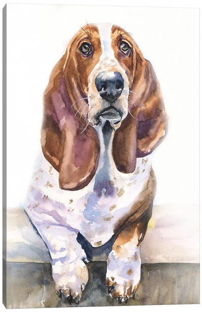 Basset Hound Canvas Art Print