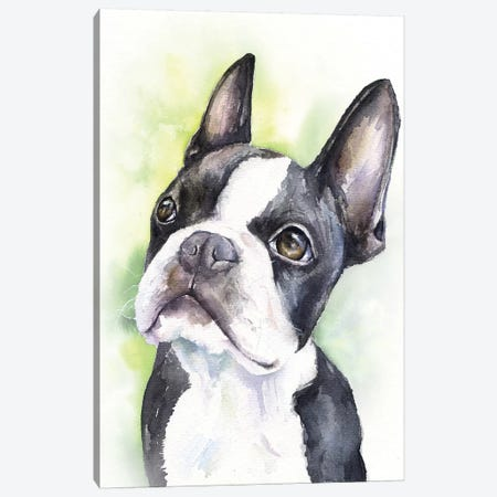 Boston Terrier Puppy Canvas Print #GDY199} by George Dyachenko Canvas Art