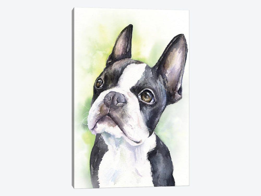 Boston Terrier Puppy by George Dyachenko 1-piece Canvas Art Print