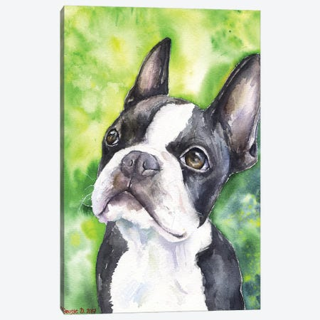 Boston Terrier Portrait Canvas Print #GDY19} by George Dyachenko Canvas Art