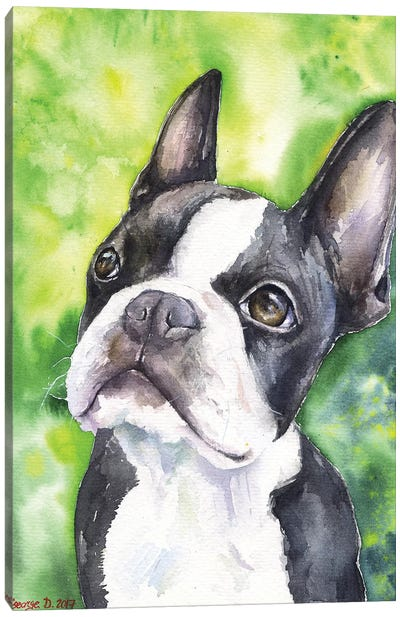 Boston Terrier Portrait Canvas Art Print