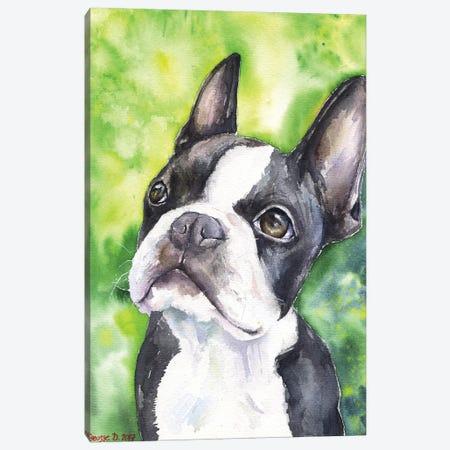 Boston Terrier Portrait Canvas Print #GDY19} by George Dyachenko Canvas Art