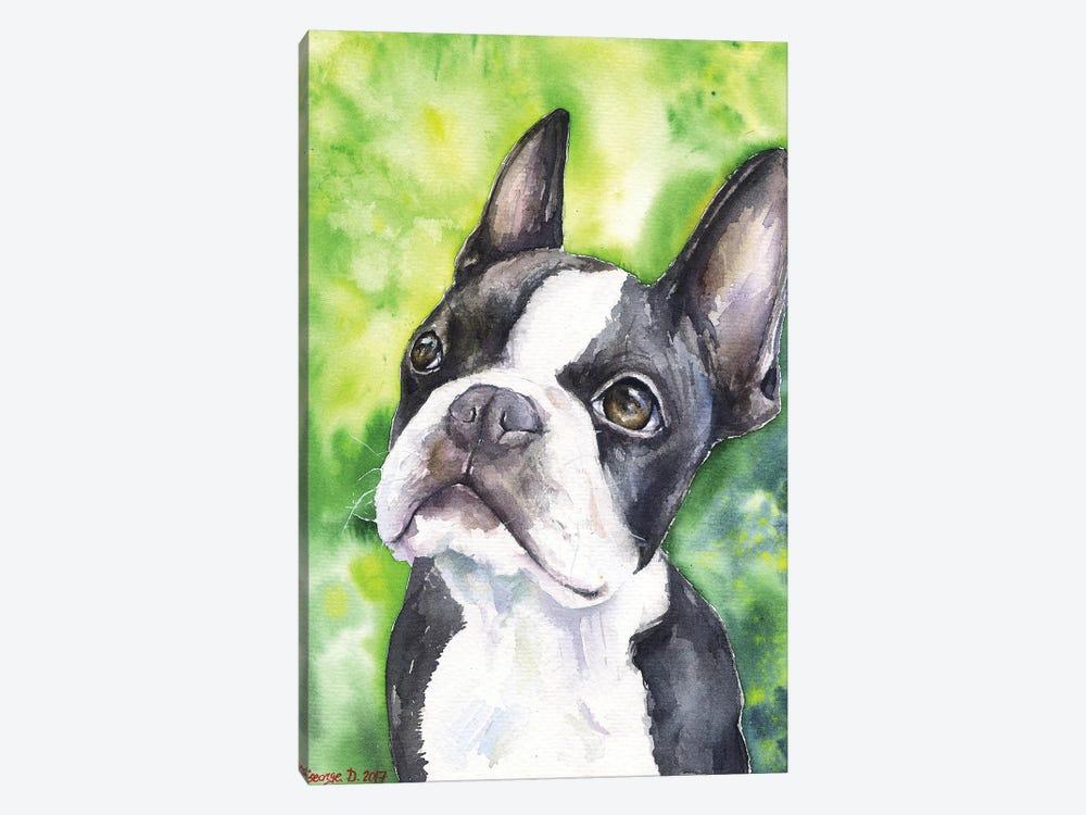 Boston Terrier Portrait by George Dyachenko 1-piece Canvas Art