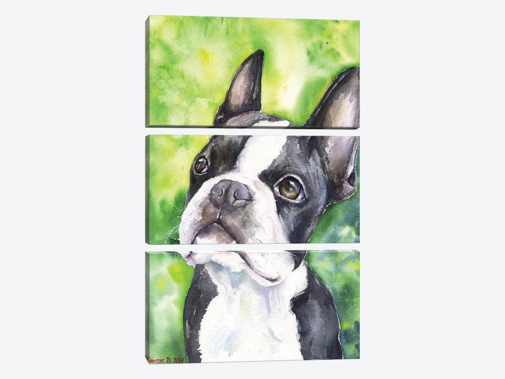 Boston Terrier Portrait by George Dyachenko 3-piece Canvas Artwork