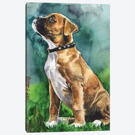Boxer Puppy I Canvas Print #GDY202} by George Dyachenko Canvas Artwork