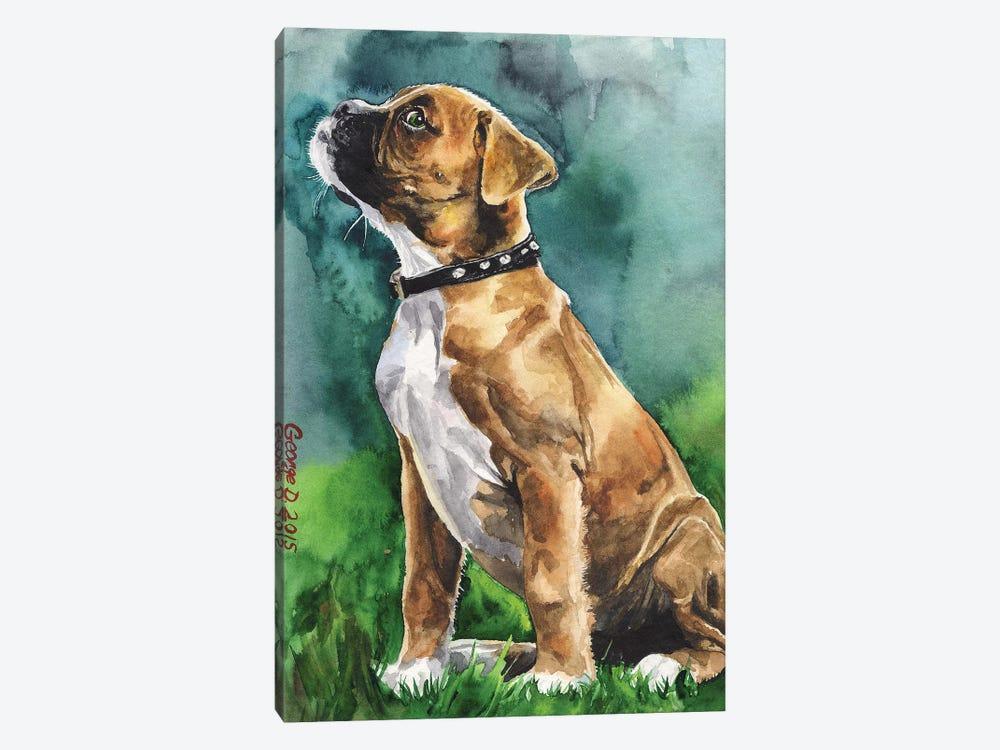 Boxer Puppy I by George Dyachenko 1-piece Canvas Art Print