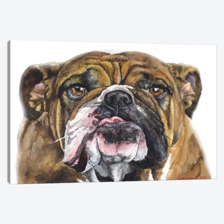 Bulldog II Canvas Print #GDY204} by George Dyachenko Canvas Art Print