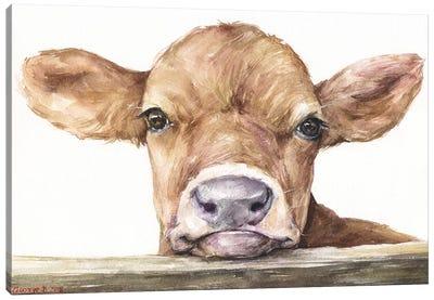 Calf Canvas Art Print