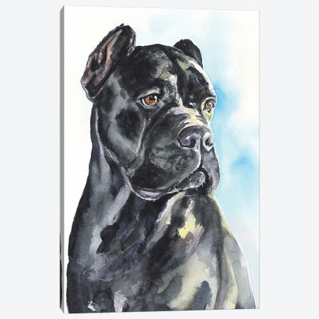 Cane Corso Canvas Print #GDY207} by George Dyachenko Canvas Art Print