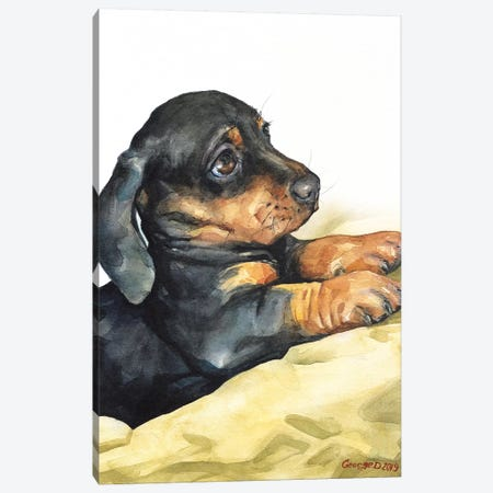 Dachshund Puppy Canvas Print #GDY209} by George Dyachenko Canvas Artwork