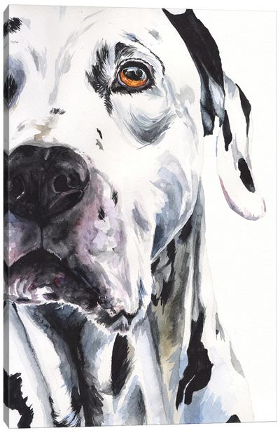 Dalmatian II Canvas Art Print