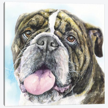 English Bulldog I Canvas Print #GDY215} by George Dyachenko Canvas Art