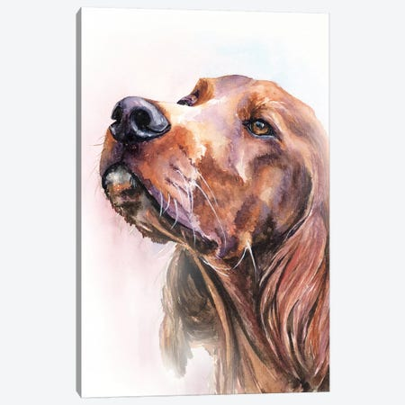 Irish Setter Canvas Print #GDY222} by George Dyachenko Canvas Art