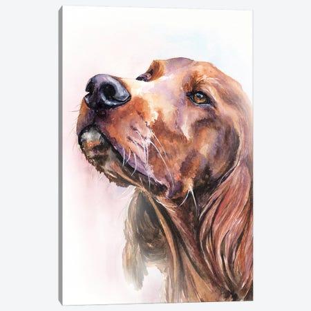 Irish Setter Canvas Print #GDY222} by George Dyachenko Canvas Art