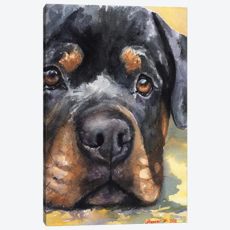Rottweiler Canvas Print #GDY230} by George Dyachenko Art Print