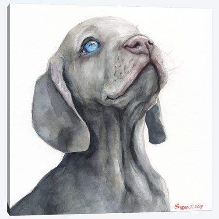 Weimaraner Puppy Canvas Print #GDY233} by George Dyachenko Canvas Art Print