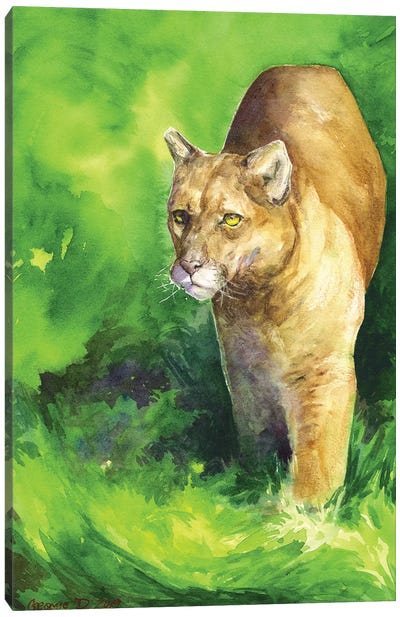 Mountain Lion Canvas Art Print