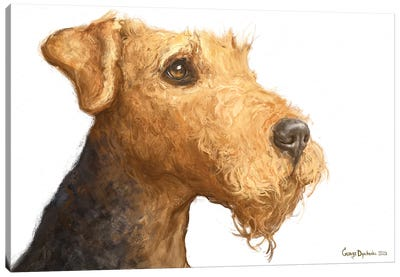 Airedale White Background Canvas Art Print
