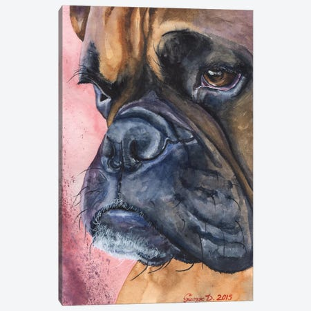 Boxer Portrait Canvas Print #GDY23} by George Dyachenko Canvas Print