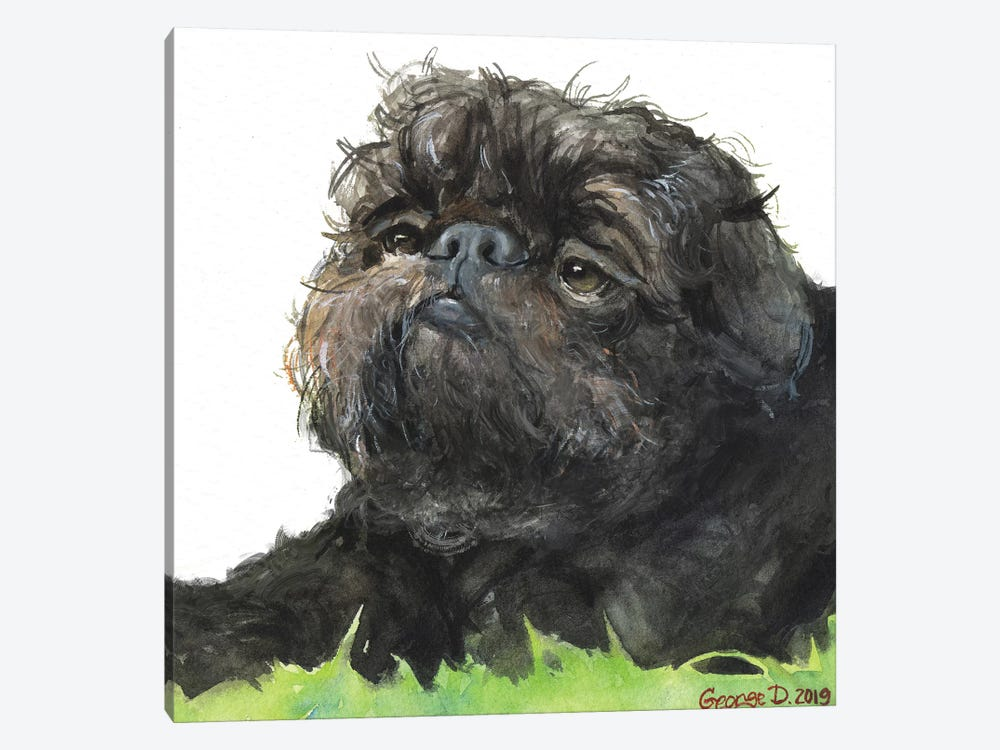Black Brussel Griffon White Background by George Dyachenko 1-piece Canvas Wall Art