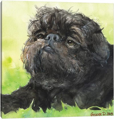 Black Brussel Griffon With Background Canvas Art Print