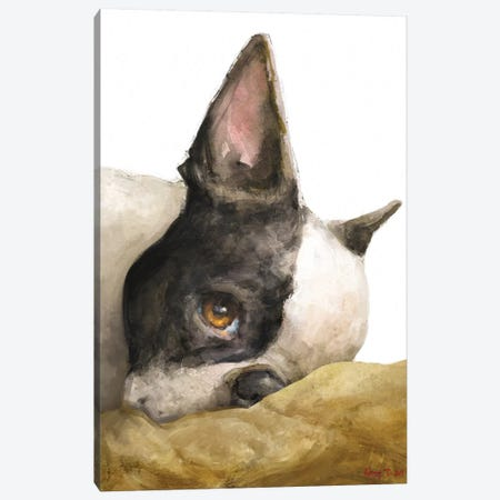 Boston Terrier White Background Canvas Print #GDY244} by George Dyachenko Canvas Print