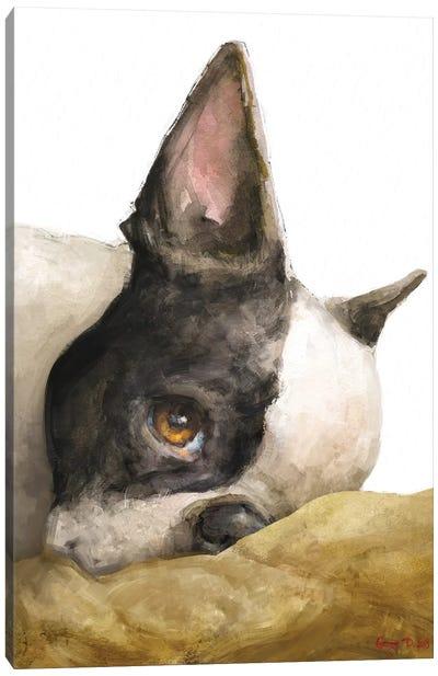Boston Terrier White Background Canvas Art Print