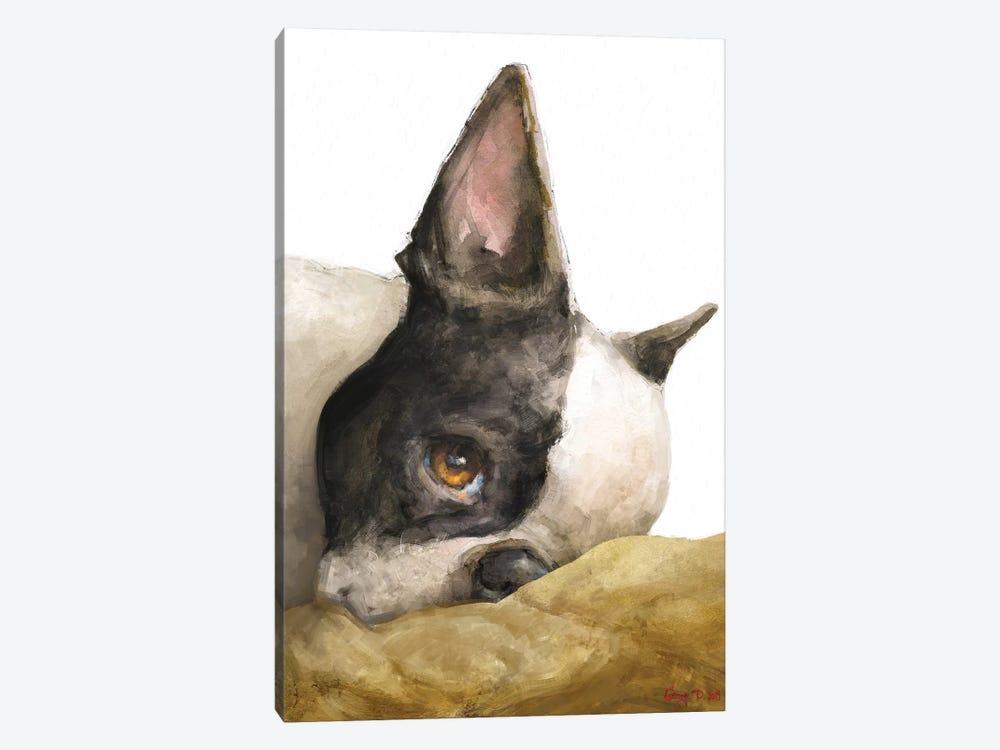 Boston Terrier White Background by George Dyachenko 1-piece Canvas Print