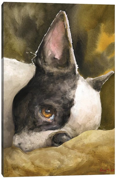 Boston Terrier With Background Canvas Art Print