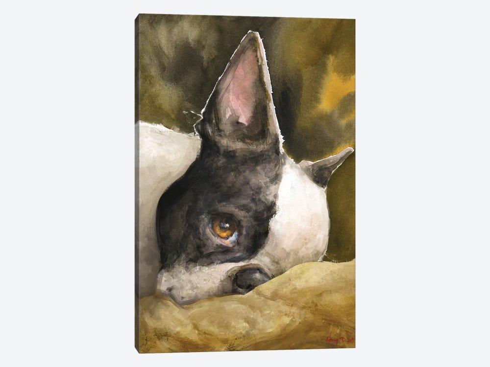 Boston Terrier With Background by George Dyachenko 1-piece Canvas Artwork
