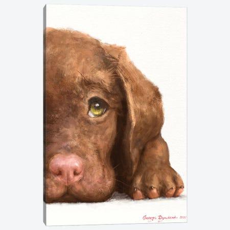 Chocolate Labrador Puppy Canvas Print #GDY249} by George Dyachenko Canvas Artwork