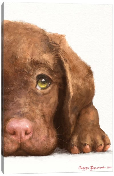 Chocolate Labrador Puppy Canvas Art Print