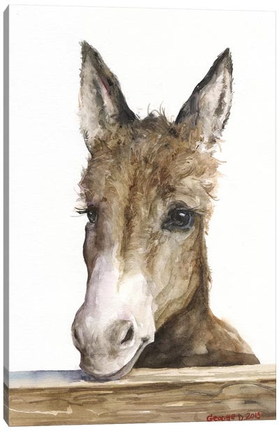 Cute Donkey Canvas Art Print