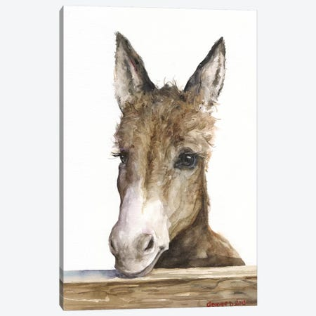 Cute Donkey Canvas Print #GDY252} by George Dyachenko Art Print