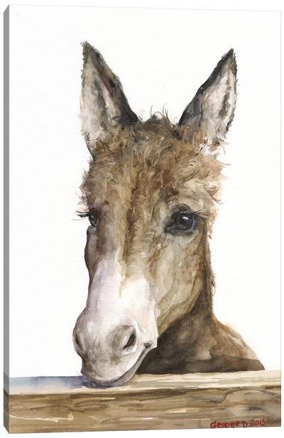 Cute Donkey Canvas Art Print