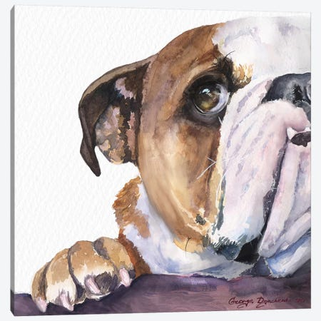 Peek A Boo English Bulldog Puppy Canvas Print #GDY257} by George Dyachenko Canvas Wall Art