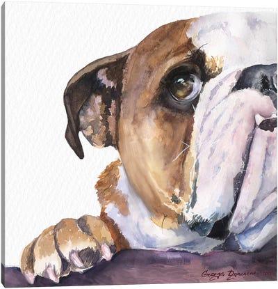 Peek A Boo English Bulldog Puppy Canvas Art Print