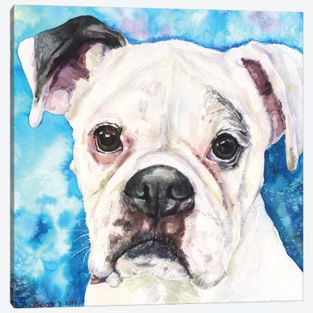White Boxer II Canvas Print #GDY25} by George Dyachenko Canvas Art